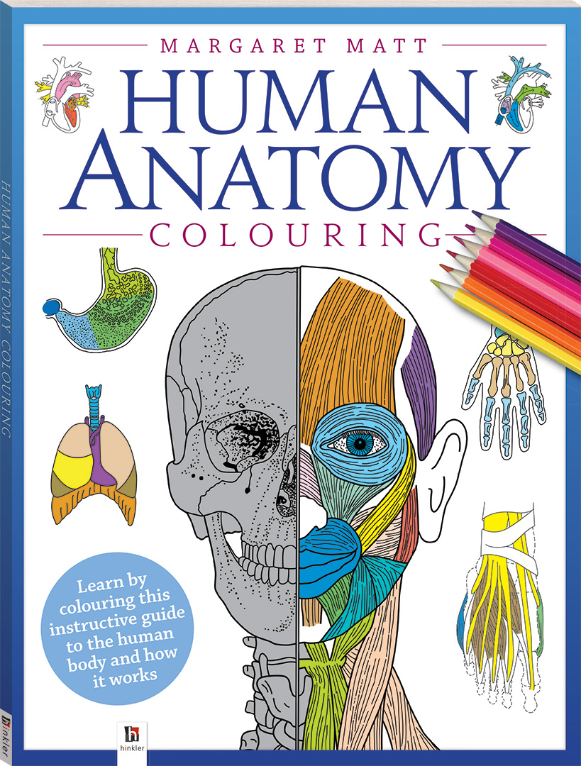 Anatomy coloring book for health professions - Human Anatomy Colouring Book Reference Adults Hinkler
