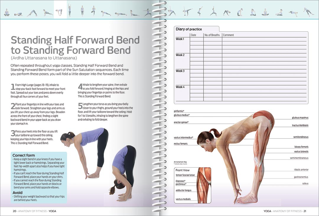 Anatomy of Fitness: Yoga - Gift Sets - Adults - Hinkler